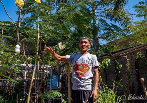 Suparmans Treevolution: Seeds of the Future