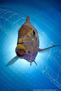 Ghost net fishing lines continue to catch fish when discarded